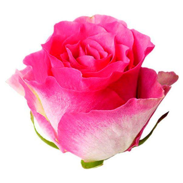 Роза Малибу 80 см.