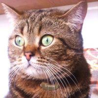 Кулон для котов кошек