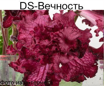 DS-Вечность (П.Еникеев)
