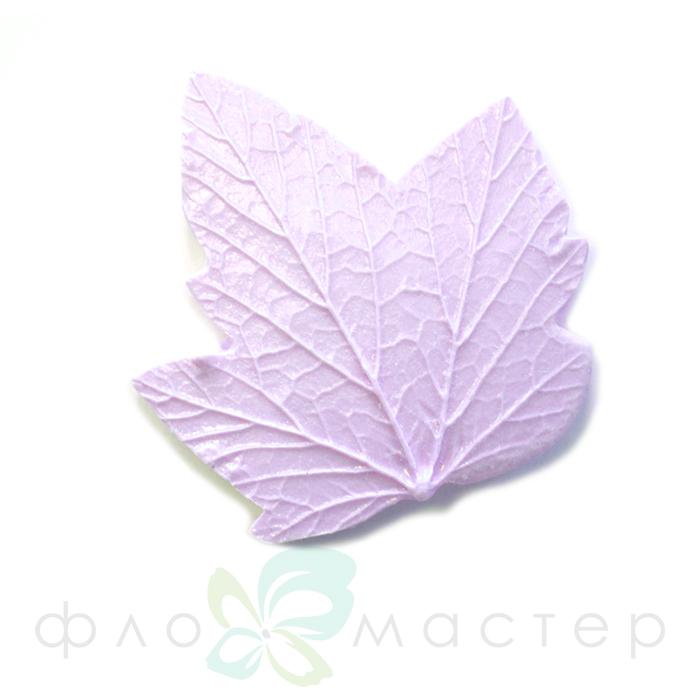Молд лист смородины