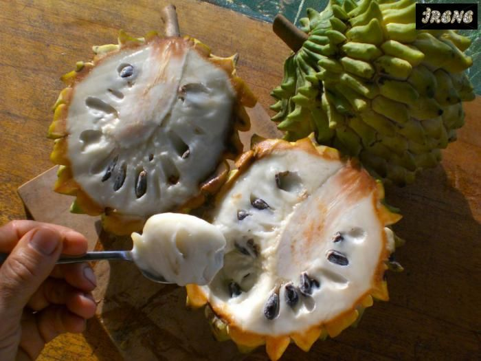 ❦ Бириба (Rollinia deliciosa) ❦