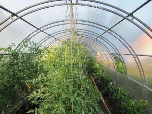 Теплица из поликарбоната Ферма-1 10х3х2 (двойная труба 20х20, шаг 1 метр)