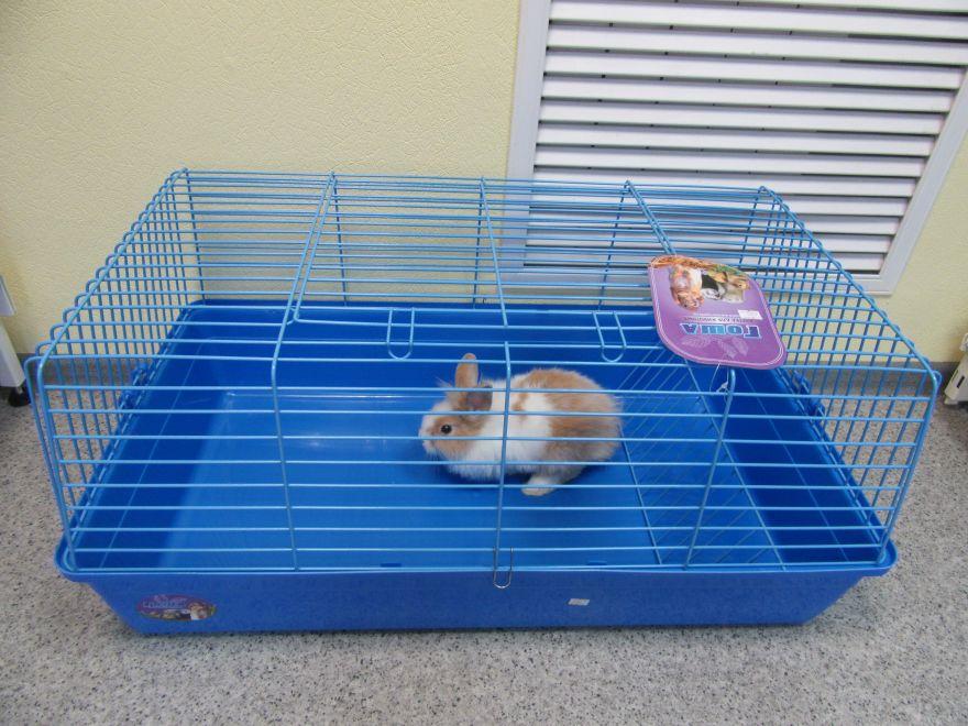 """Клетка для кролика """"ГОША"""" 85*49*40"""