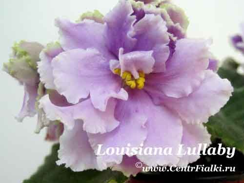 Louisiana Lullaby (LLG/P.Sorano)