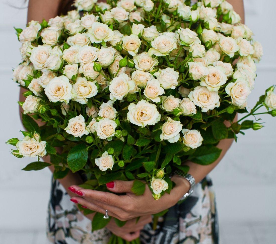 21 кустовая роза Creme