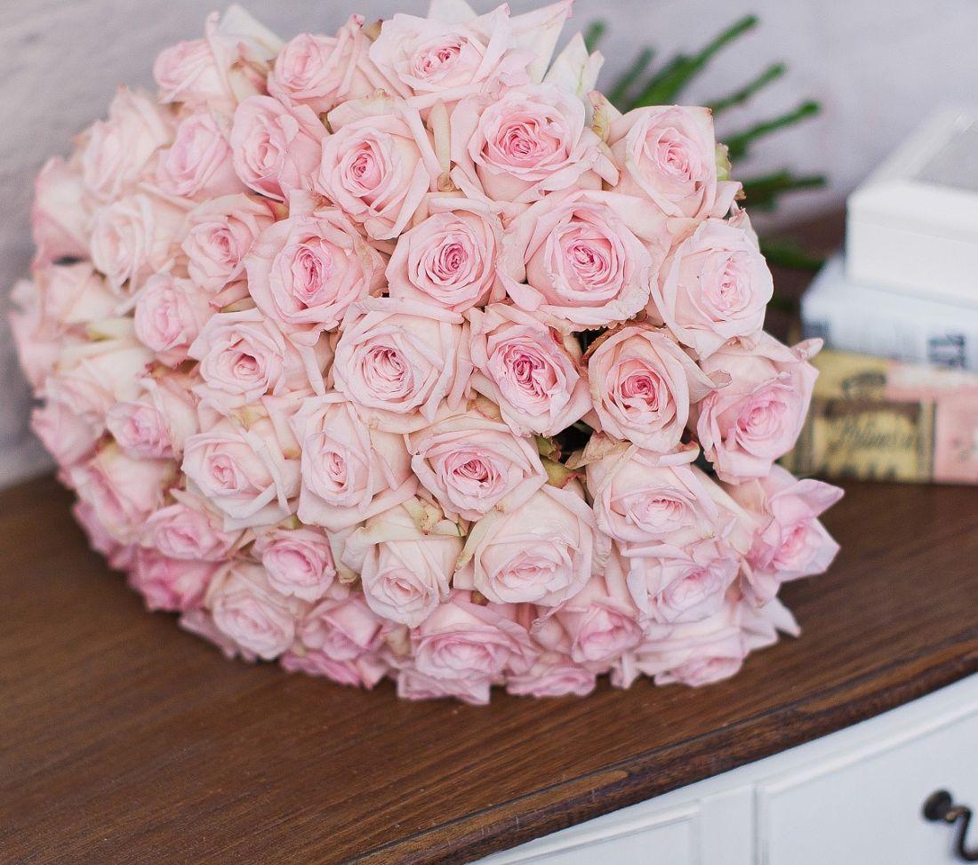 Роза Pink O'Hara 60 см.