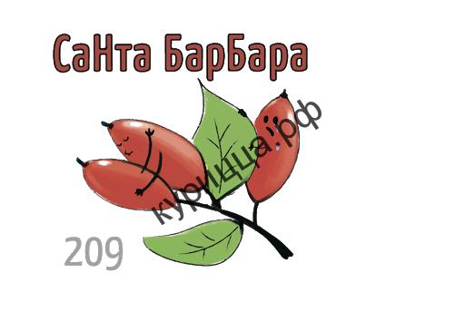 Табак Икс – Санта Барбара (Барбарис) 1гр.