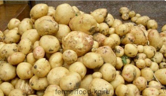 Картофель молодой мелкий/ 1 кг