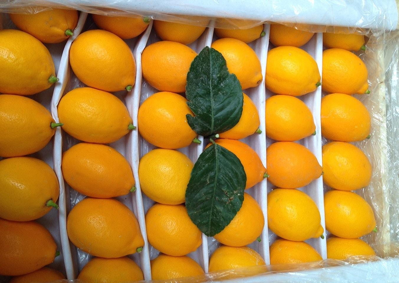 Купить лимоны оптом