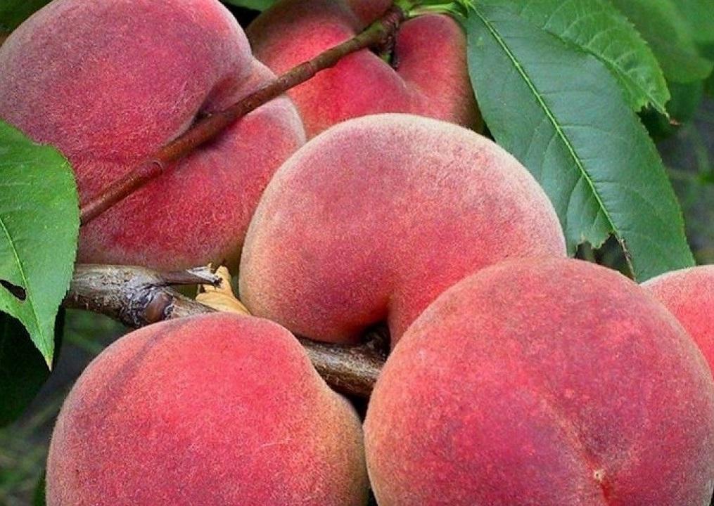 Персики оптом