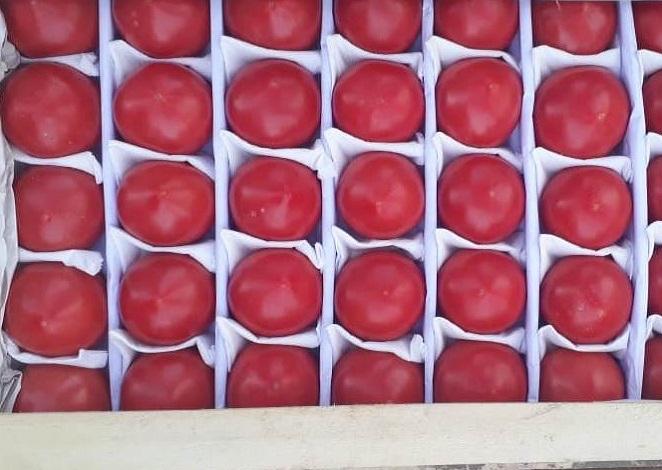 Купить помидоры оптом