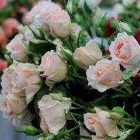 Подписка на цветы M Mono