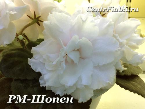 РМ-Шопен (Н.Скорнякова)
