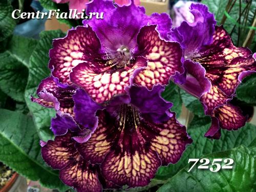 7252 (П. Клещыньски)