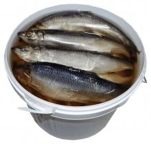 Сельдь слабой соли  тушка 400 гр  Спб ведро  4 кг