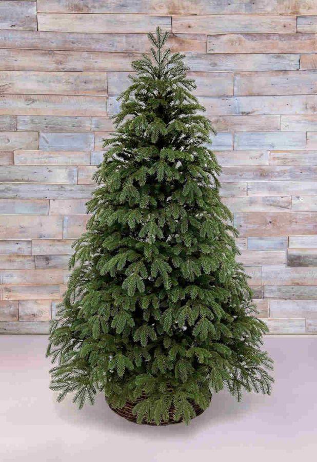 Ель Дворянская 155 см зеленая