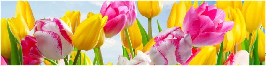 Кухонный фартук AG 04 - Тюльпаны цветы