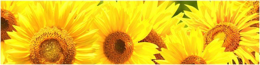 Кухонный фартук AG 07 - Подсолнухи цветы