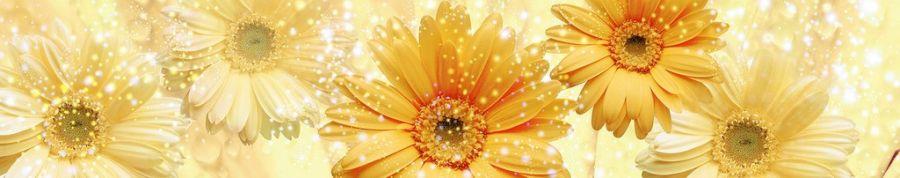 Кухонный фартук BS 52 - Желтые хризантемы цветы