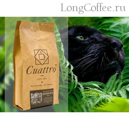 Arabica coffee plant height