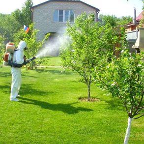 Опрыскивание деревьев от болезней и вредителей
