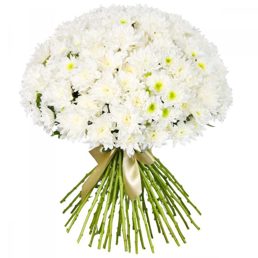 35 кустовых хризантем в ленте