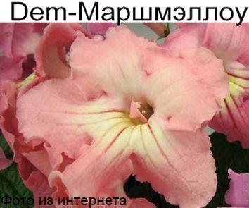 Dem-Маршмэллоу(60)  (Д.Демченко)