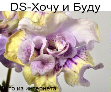 DS-Хочу и Буду (П.Еникеев)