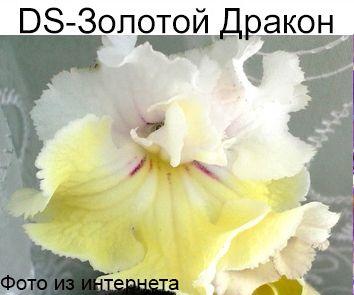 DS-Золотой дракон (П.Еникеев)