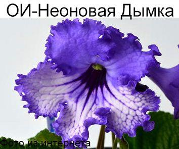 ОИ-Неоновая Дымка (О.И.Сачок)