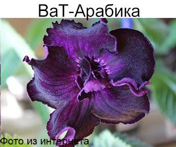 ВаТ-Арабика (Т.Валькова)