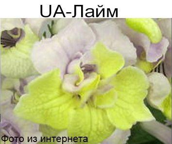 UA-Лайм (Ю.Склярова)