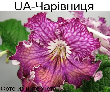 UA-Чаровница (Ю.Склярова)