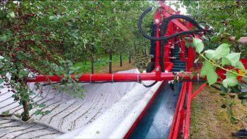 Комбайн для вишни и сливы MAJA Weremczuk