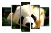 Модульная картина Взрослая панда