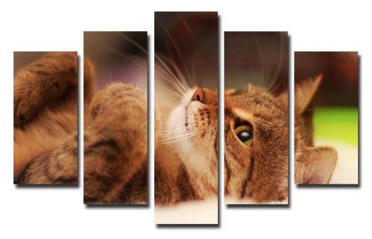 Модульная картина Кошка