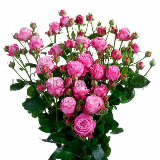 Роза 30 Спрей Леди Бомбастик