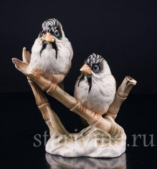 Изображение Усатые ткачи на бамбуке, Karl Ens, Германия, вт. пол. 20 в