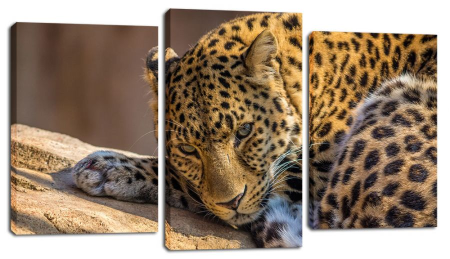 Модульная картина Отдых леопарда