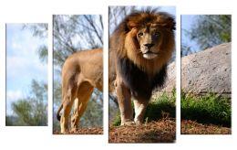 Благородный лев