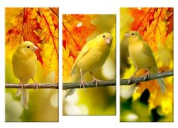 Желтые птички