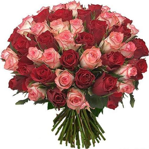 51 роза Двухцветная  50 см