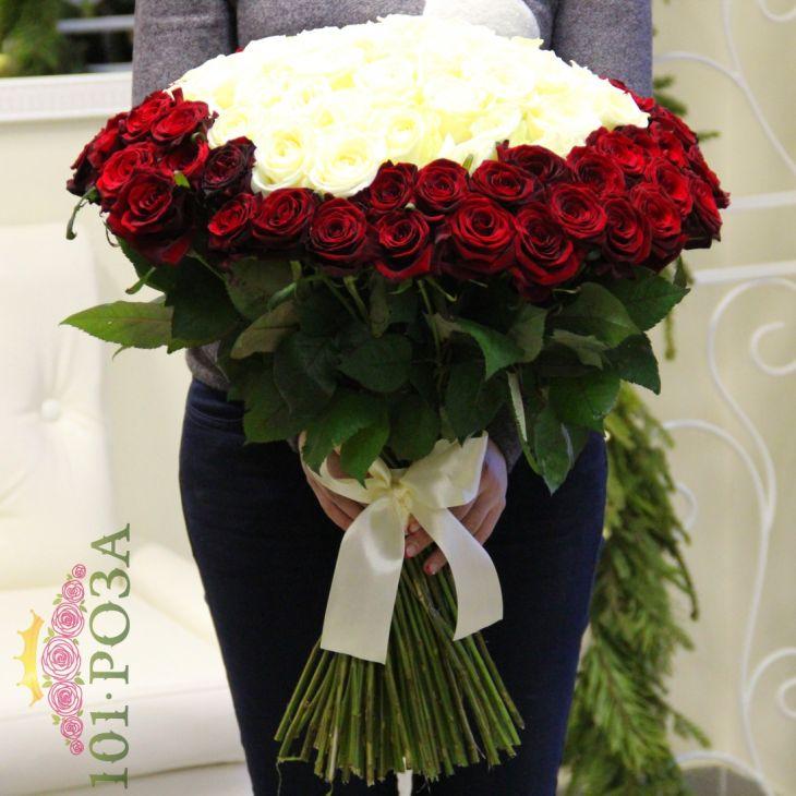 101 роза 60 см красно белая роза