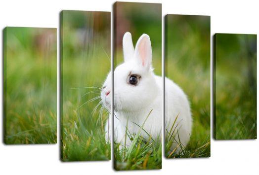 Модульная картина Белый кролик