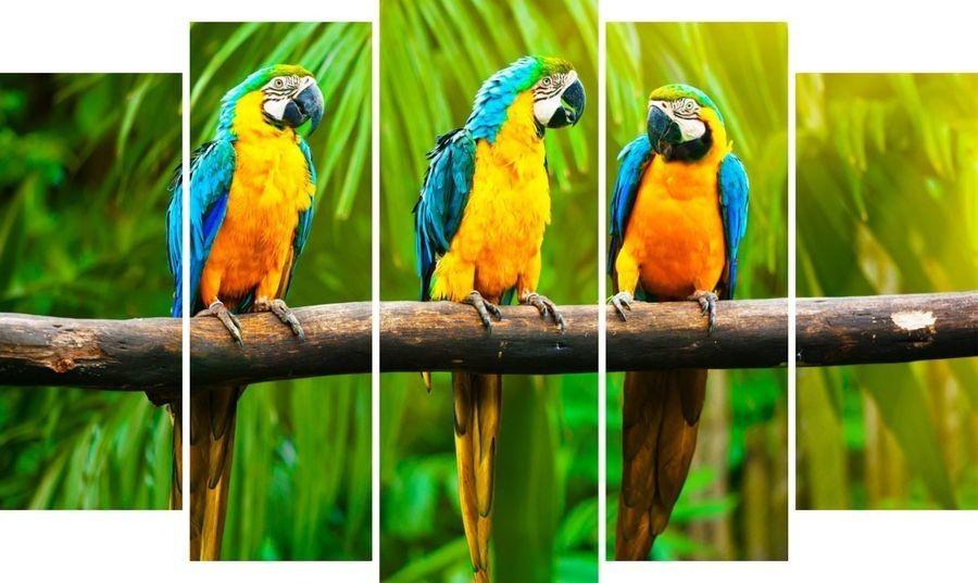 Модульная картина Попугаи