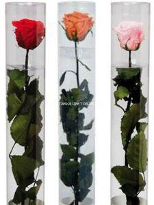 Стабилизированная живая роза