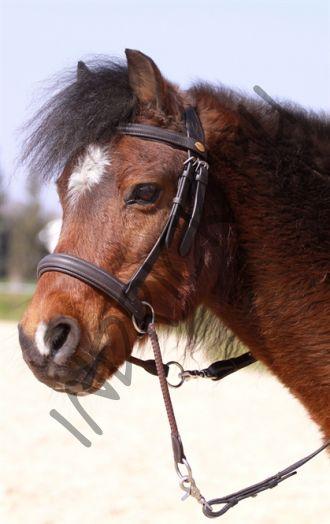 Беcтрензельная уздечка Barefoot Walnut Pony Barry