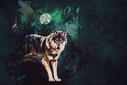 Волки в лесу футер 2-х нитка