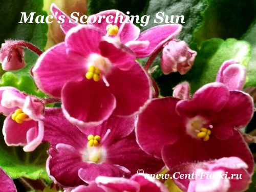 Mac's Scorching Sun (G. McDonald)