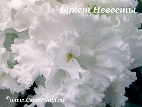 Букет Невесты (К.Морев)